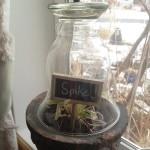 Cloche Vase DIY