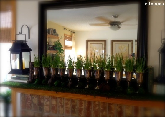 The goblets look fabulous and the shaggy winter wheat is ready for a haircut!