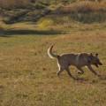 Sonny in the field