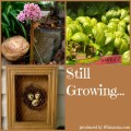 Still Growing Garden Podcast 6ftmama