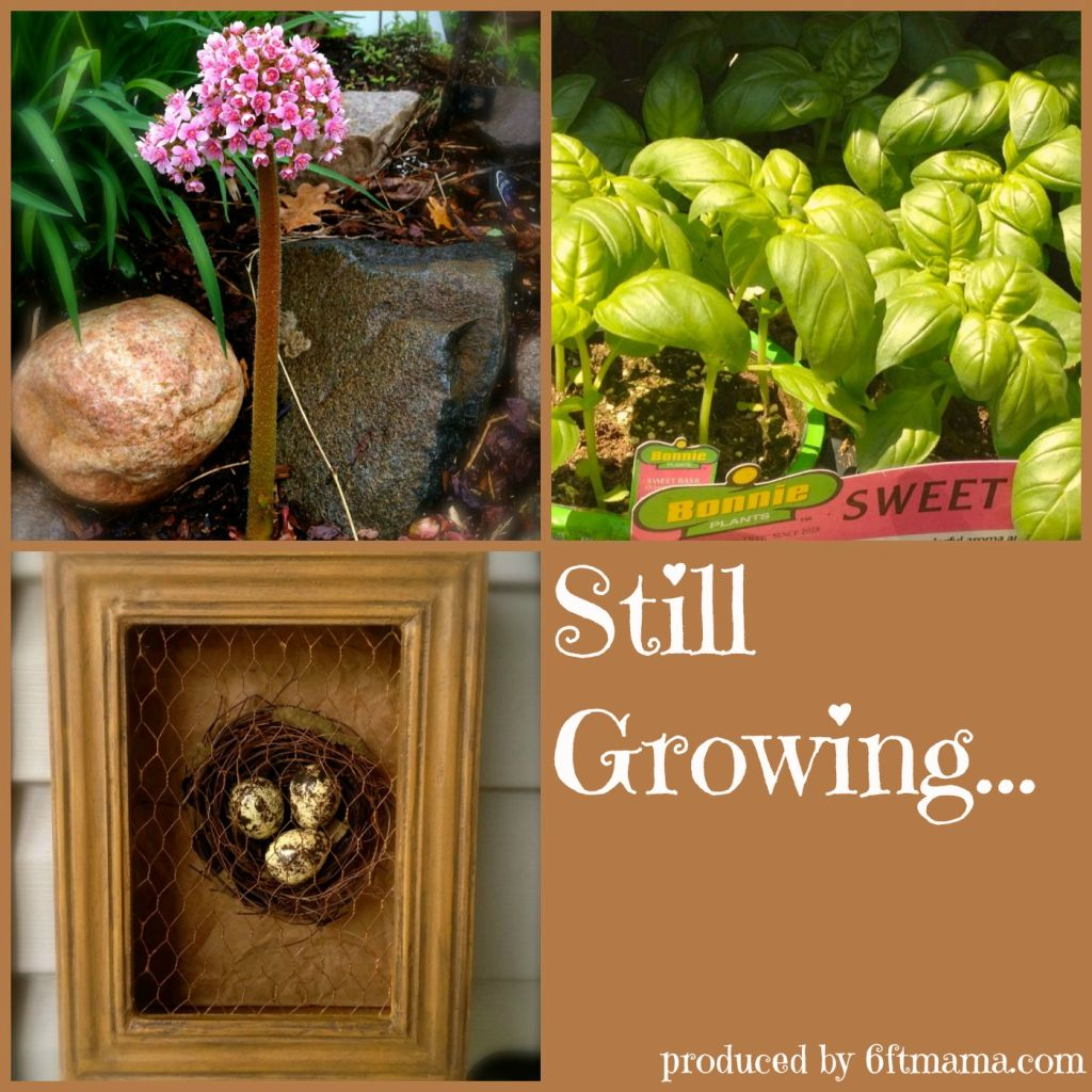 Still Growing Garden Podcast 6ftmama