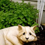 Mittens by the Catmint