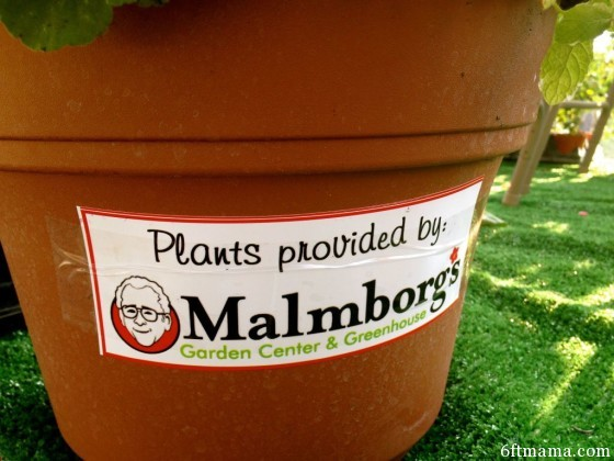 Plants provided by malmborgs