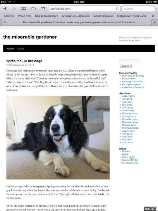The Best Garden Bloggers 2013 the miserable gardener