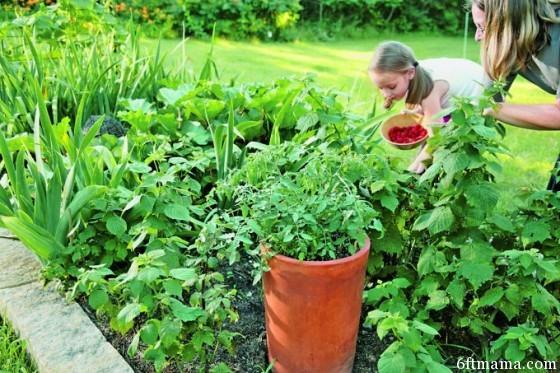 Emily Tepe Edible Landscaping SG513