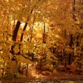 Back to Normal Fall Foliage 6ftmama