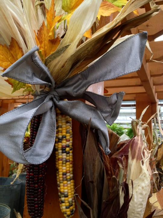 Indian Corn and Ribbon