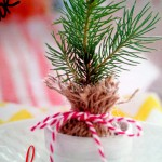 Spruce Party Favor Close Up 6ftmama.com