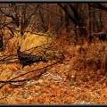 Wild Turkeys 3 6ftmama.com