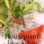 Houseplant Spa Day 6ftmama.com