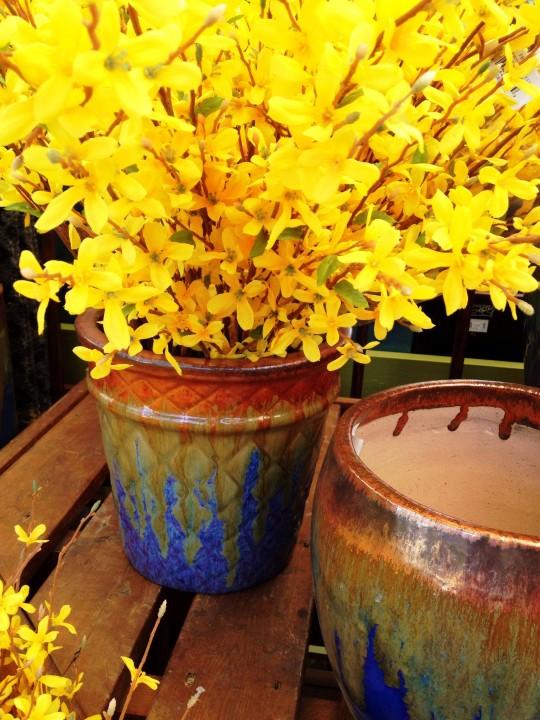 Forsythia Silks 2 6ftmama.com