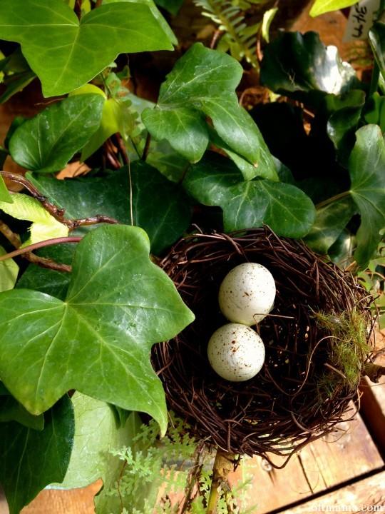 Spring Nest 6ftmama.com