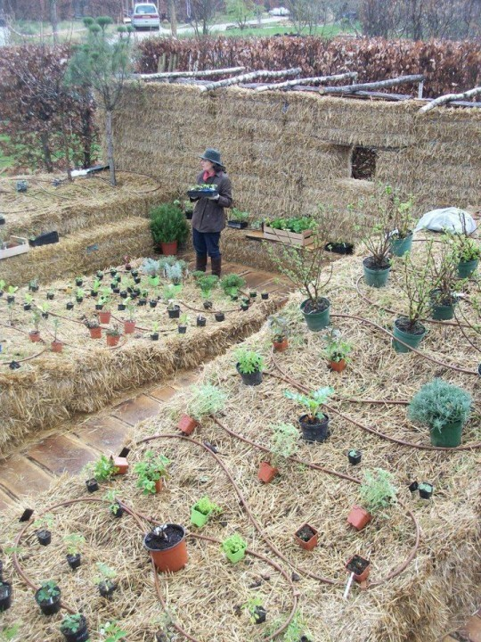 Straw Bale Gardening in France with Joel Karsten 6ftmama.com