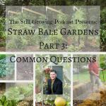 Straw Bale Gardens Part 3