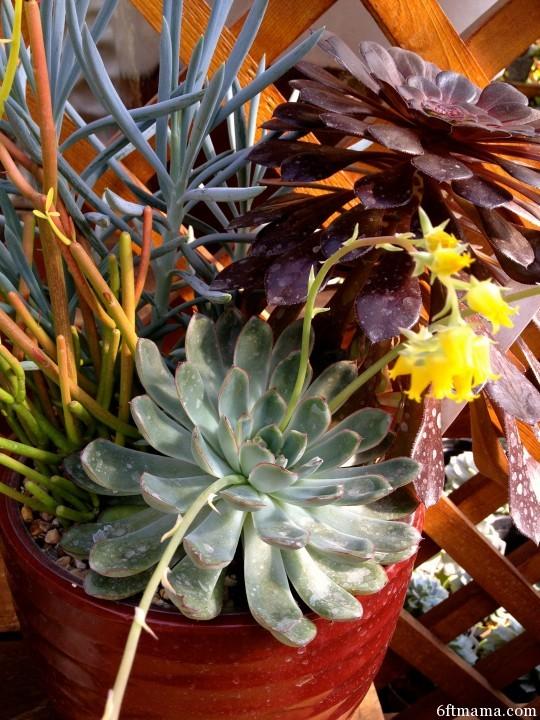 Succulent Pot 5 6ftmama.com