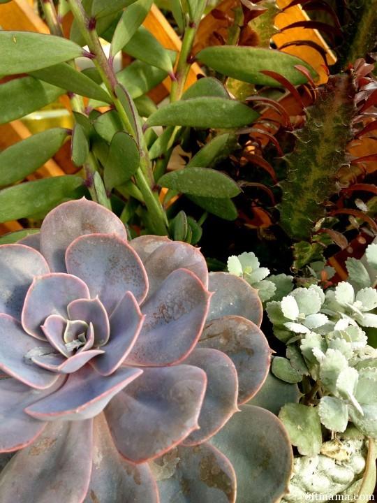 Succulent pot 4 tonkadale 6ftmama.com