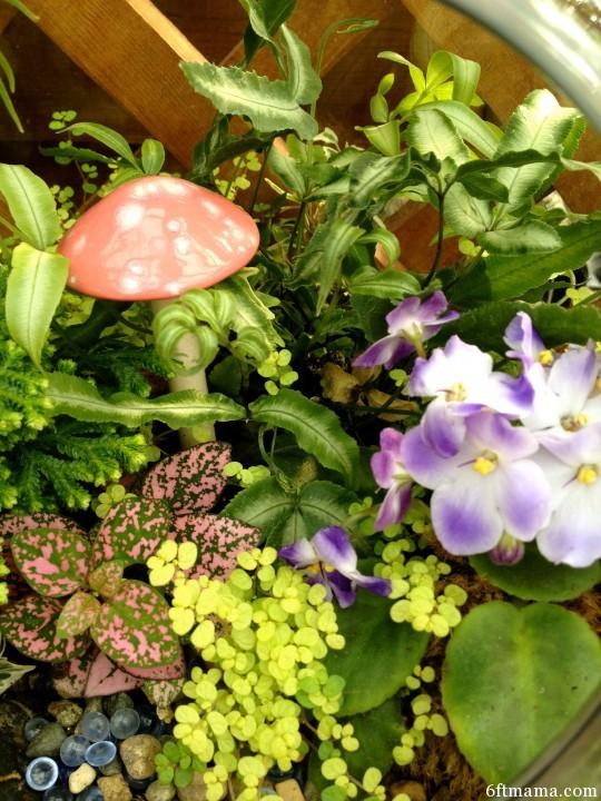 mushroom clay pot kingdom 6ftmama.com