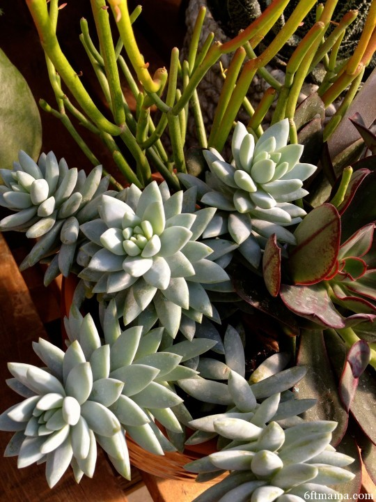 succulent pot 1 tonkadale 6ftmama.com