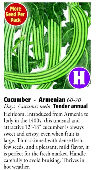 Armenian Cucumber 6ftmama.com