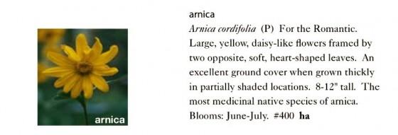 Arnica Seeds Trust 6ftmama.com