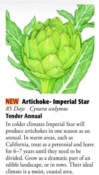Artichoke Imperial Star 6ftmama.com