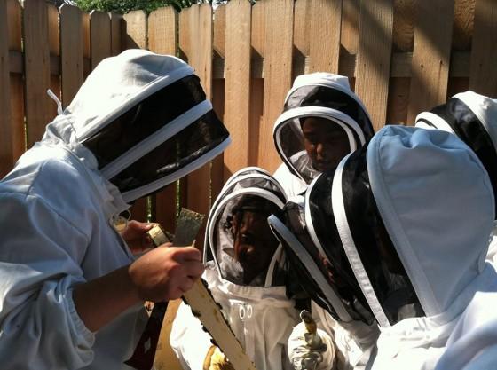 The Beez Kneez Urban Bee Hive Bee Education 6ftmama.com