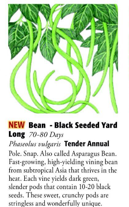 Black Seeded Yard Long Bean 6ftmama.com