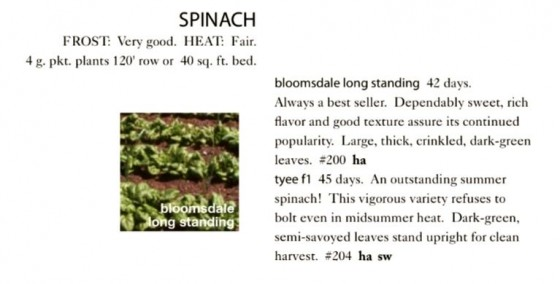 Bloomsdale Long Standing Spinach Seeds Trust 6ftmama.com
