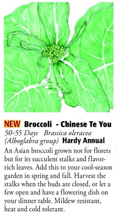 Chinese Te You Broccoli 6ftmama.com