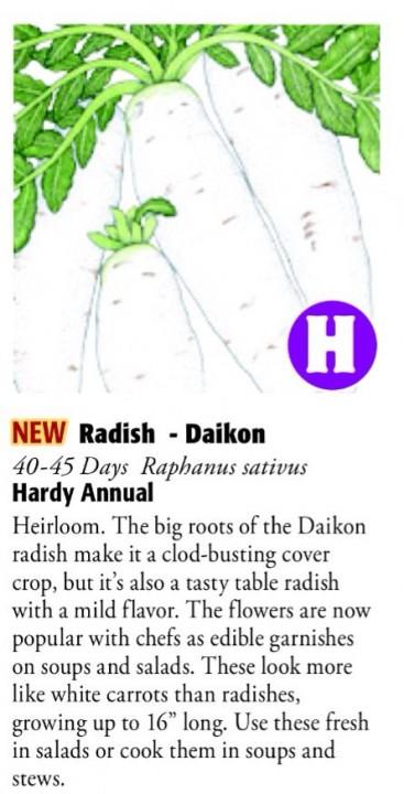 Daikon Radish 6ftmama.com