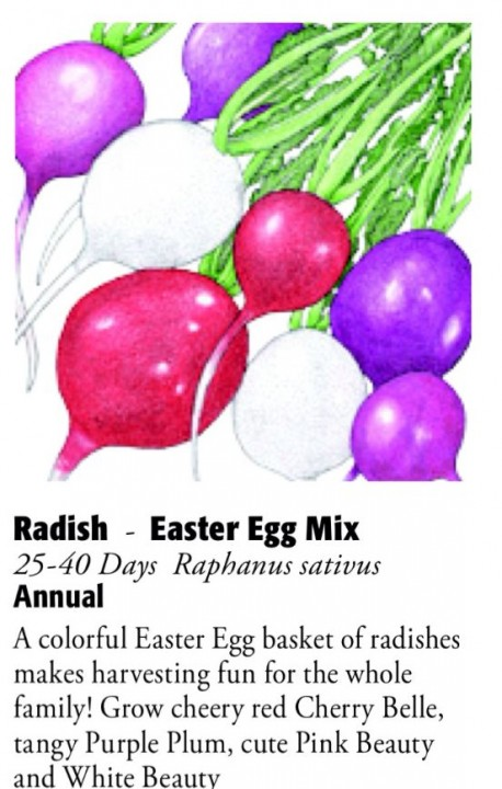 Easter Egg Mix Radish 6ftmama.com