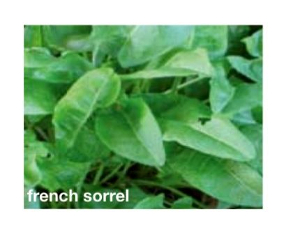 French Sorrel Seeds Trust 6ftmama.com