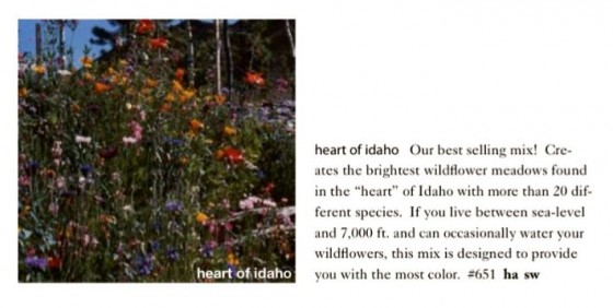 Heart of Idaho Wildflower Mix Seeds Trust 6ftmama.com