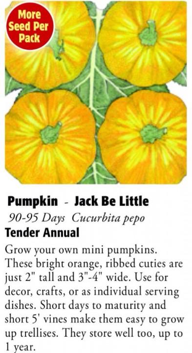 Jack Be Little Pumpkin 6ftmama.com