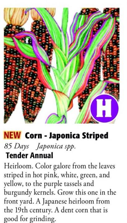 Japonica Striped Corn 6ftmama.com