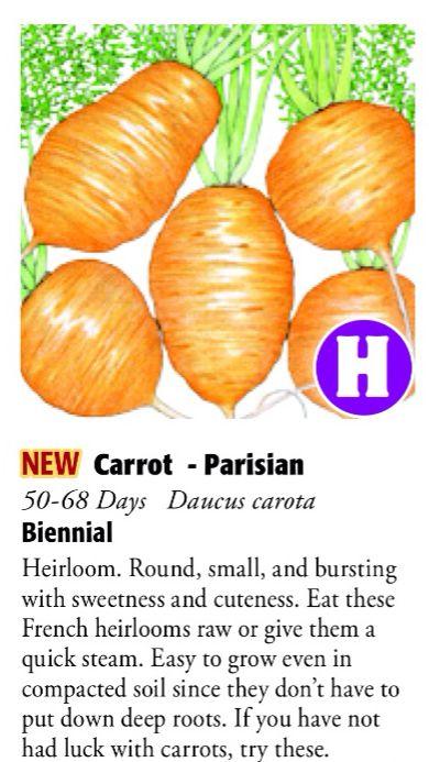 Parisian Carrot 6ftmama.com