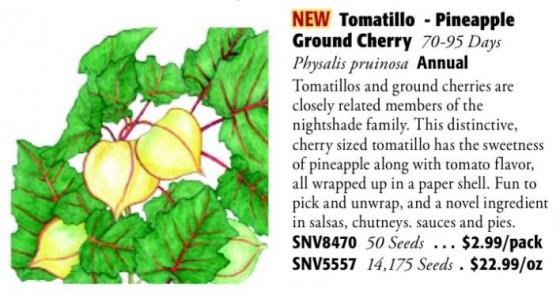 Pineapple Ground Cherry Tomatillo 6ftmama.com