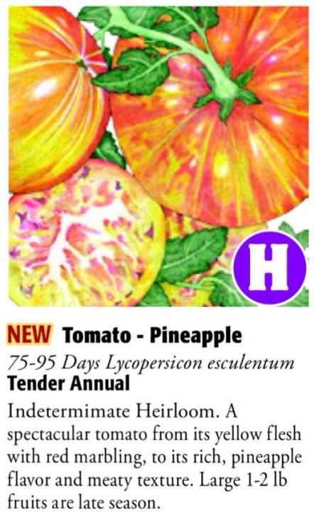 Pineapple Tomato 6ftmama.com