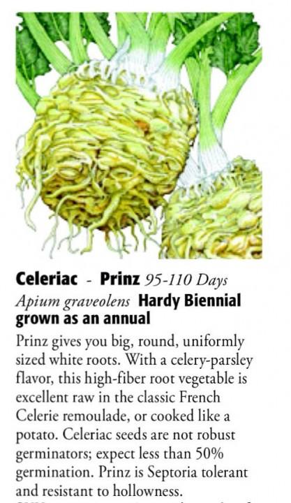 Prinz Celeriac 6ftmama.com