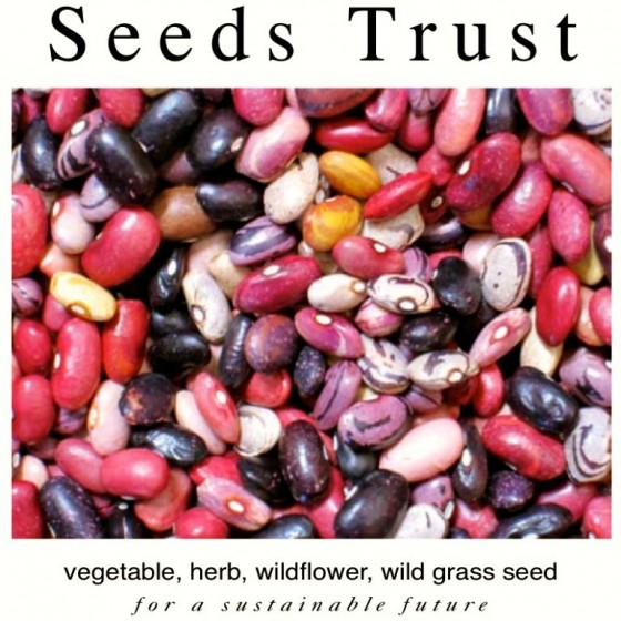 Seeds Trust Catalog Headshot 6ftmama.com