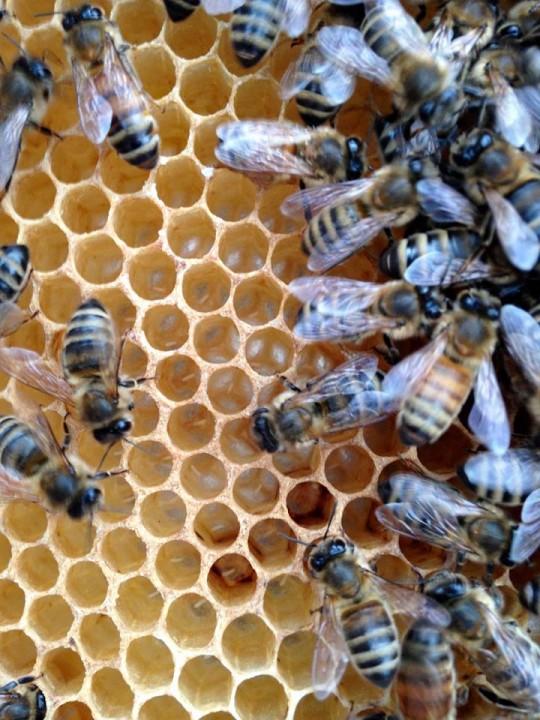 The Beez Kneez bee hive and eggs 6ftmama.com