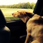 Sonny rides to Puptown 2014 the Still Growing Gardening Podcast 6ftmama blog