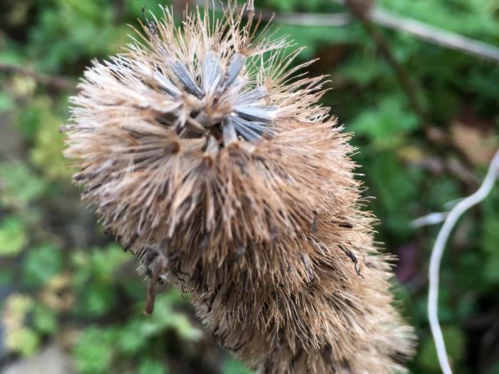 Fall Bottle Brush Seeds 6ftmama blog