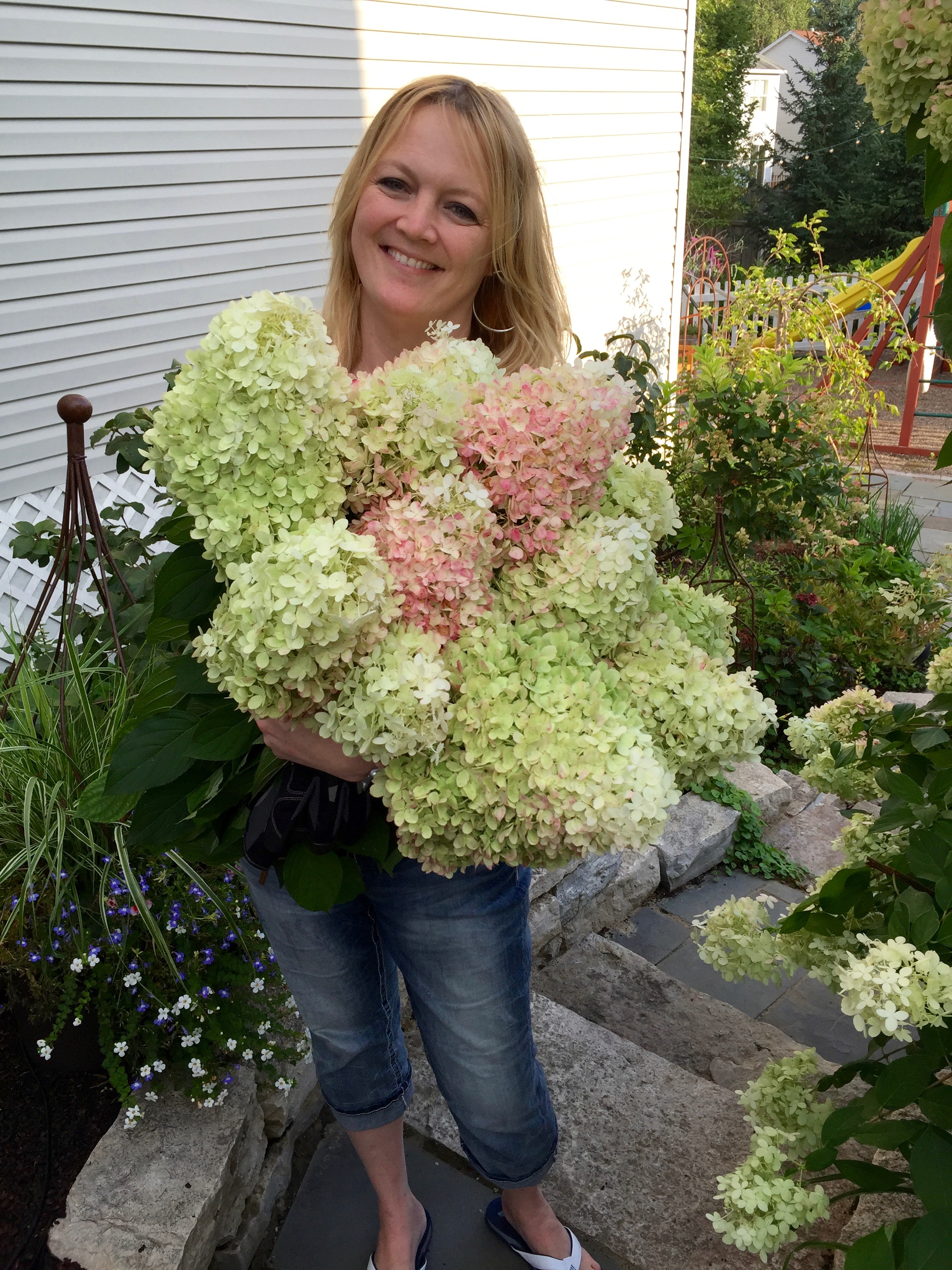 Harvesting Hydrangea Jennifer Ebeling Still Growing Gardening Podcast 6ftmama blog