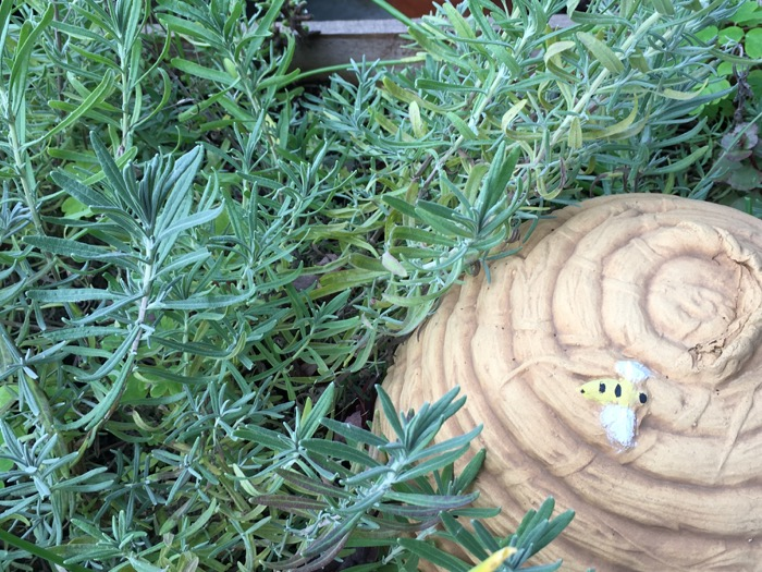 lavendar-6ftmama-blog