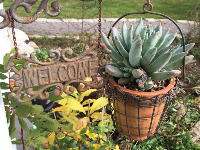 november-succulents-6ftmama-blog