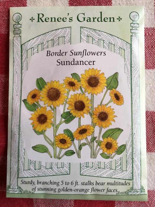 Sundancer Border Sunflowers Renee's Garden