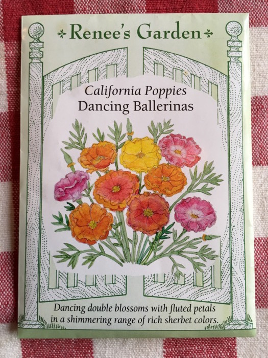 Dancing Ballerinas California Poppies Renee's Garden