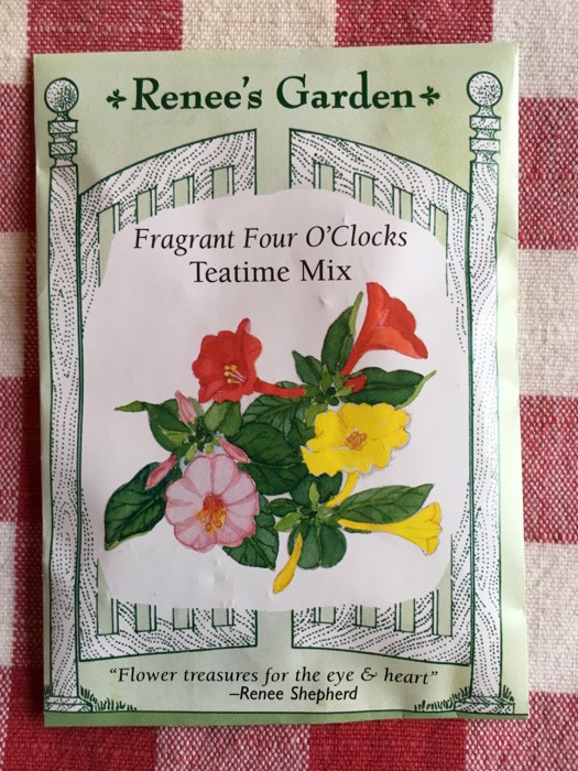 Teatime Mix Four O'Clocks Renee's Garden