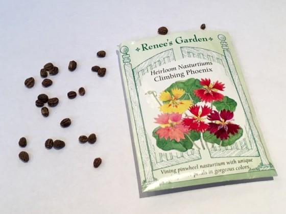Seed from Climbing Phoenix Heirloom Nasturtiums Renee's Garden